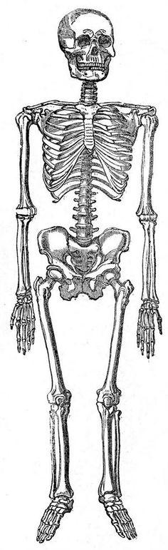 Free Halloween Vintage Skeleton Image