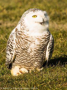 Bird Of Prey Shoot 08.02.15