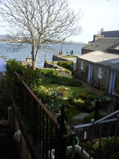 Orkney - Stromness    Hows this for a garden?