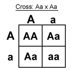 How is a punnett square used to predict genotypes and phenotypes Quora Sample Resume, Image Search, Science, Logos, Genetics, Biology, Dna, Teacher, Plant