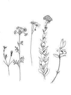 Wildflower drawings, tattoo idea?