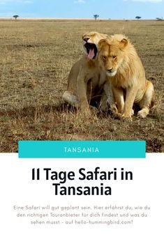 Eine Safari ist nicht billig, und genau deshalb musst du sie genau planen. Hier erfährst du, welchen Anbieter ich besonders gut fand, was er angeboten hat und was auf deiner Route nicht fehlen darf. Safari, Animals, Tanzania, Africa, Alone, Travel Advice, Adventure, Life, Animales