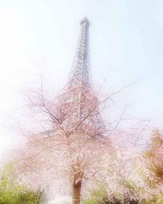 Paris in the Spring Eiffel Tower 8x10 photograph