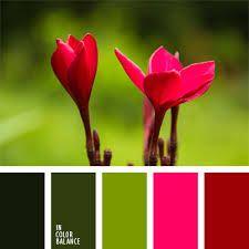 Картинки по запросу сочетание фуксии с другими цветами палитры