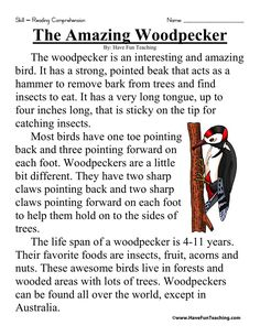 The Amazing Woodpecker - Comprehension Worksheets