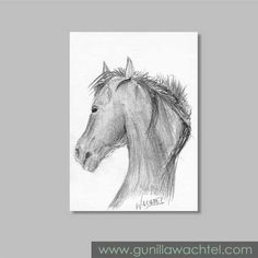 ACEO Original Horse Sketch