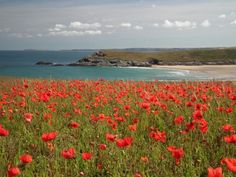 Wild Flowers in the Cornish Landscape   Photoblog   MyFinePix UK