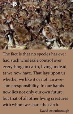 bat conservation - wise words from the wonderful sir david attenborough Bat Conservation International, David Attenborough, Wildlife Conservation, Natural World, Amazing Nature, Wise Words, All Gods Creatures, Our Planet, No Response