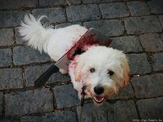 Taken at Zombie Walk 2014, Turku, Finland - Dogs | Funpic.hu - biggest collection of funny pictures and videos