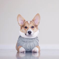 Photographer Emily Wang's pups always look serene wrapped in blankets and lounging against a white backdrop.