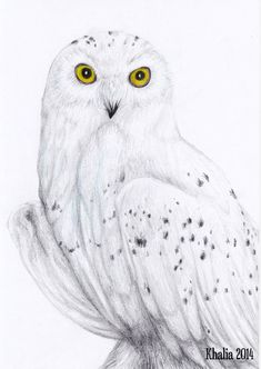Snowy Owl Drawing by KhaliaArt.deviantart.com on @DeviantArt