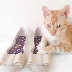 Modelando  #cat #pet #felino #gato #maedegato #animal #catlovers #yellowcat  #cats #bixo #lovecats #love #photography #photooftheday #tonoadorofarm #sono #bomdia #saturday #happycat #gatofeliz http://tipsrazzi.com/ipost/1508840726515223731/?code=BTweqWGlQyz