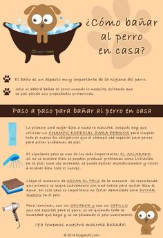 Infografía sobre cómo bañar al perro en casa