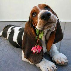 Mom, I brought you a flower...