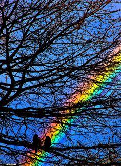 two 2 birds sitting in a Rainbow tree  brilliant rainbow through  leafless tree branckes blue sky skies