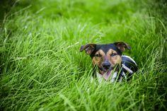 #jackrussel #terrier #dog www.artechs.eu