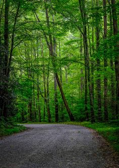 Smokey Mountain Road - Tennessee