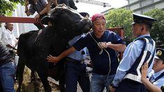 Japan farmers seek aid for radiation zone cattle