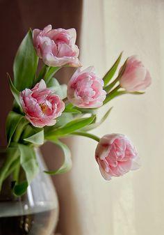 35PHOTO - Tanya Markova - My tulips