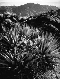 ansel adams- I love the sharp jagged lines in the foreground and softer rolling lines in the background.