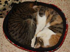 Kétjó cica szűk helyen is elfér!