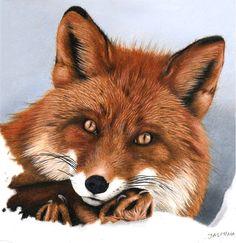 Red Fox - Colored Pencil Drawing by JasminaSusak