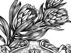 Protea etching style illustration by MUTI Flower Drawing Images, Floral Drawing, Flower Images, Flower Art, Drawing Drawing, Protea Art, Protea Flower, Botanical Illustration, Graphic Design Illustration