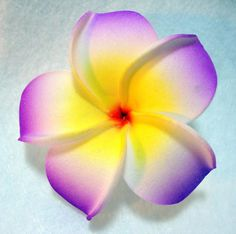 Purple Plumeria Flower Hair Clip