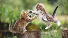 Cute Cat Fight