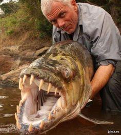 Una piraña gigante... enrrazada con cocodrilo