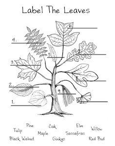 AZ Master Gardener Manual: Plant Parts and Functions