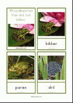 Woordkaarten Kikkers - klein
