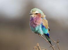 鳥 大特集2018のための鳥フォトギャラリー第4弾。「Your Shot」から厳選してお届けします。