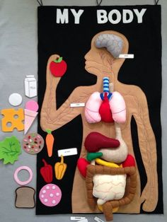 Felt human organs felt my body mat felt story play food human anatomy мое тело человек из фетра анатомия Projects For Kids, Diy For Kids, Crafts For Kids, Hand Sewing Projects, Class Projects, Human Body Activities, Preschool Activities, Felt Crafts, Diy And Crafts