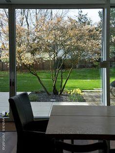 Formgehölze für den Garten #Felsenbirne oder auch #Kupferfelsenbirne…