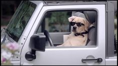 Bro Dog Commercial - Veterinary Pet Insurance Ok, this commercial is hilarious! #lol