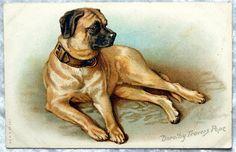 Antique Bull Mastiff Dog Postcard, Dorothy Travers Pope, Vintage c1910-20