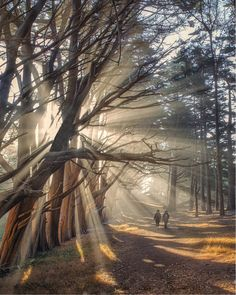 Morning at Half Moon Bay:  Fitzgerald Marine Reserve, California -- by Manuel Hutama from Smithsonian