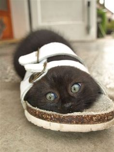 He's got big shoes to fill!  (My cat used to do this and I ended up with bunch of fluffy sandals...)...original quote found with pic. ------ Funny thing is --- ME TOO!! LOL