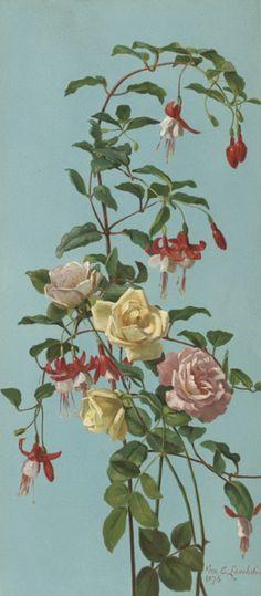 Roses and fuchsias