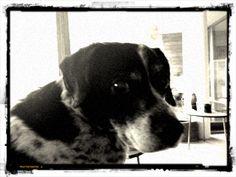 My old dog Monty