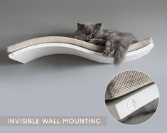 High Quality Cat Shelves by lazycatfurniture on Etsy Cat Wall Furniture, Modern Cat Furniture, Floating Cat Shelves, Invisible Shelves, Cool Cat Trees, Cat Body, Hanging Beds, Cat Perch, Cat Playground