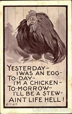 Chicken Comic, Funny