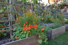 DSC_0037 | Flickr - Photo Sharing! Edible Garden, Plants, Vegetable Gardening, Flora, Vegetable Garden, Plant