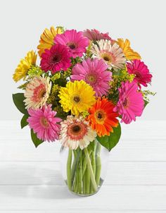 Send Sparkling Gerbera in Miami Beach, FL from Miami Beach Flowers®, the best florist in Miami Beach. All flowers are hand delivered and same day delivery may be available. Beach Flowers, Send Flowers, Beautiful Flowers, Easter Flowers, Simply Beautiful, Gerbera Daisy Bouquet, Gerbera Daisies, Bouquet Delivery, Beautiful Flower Arrangements
