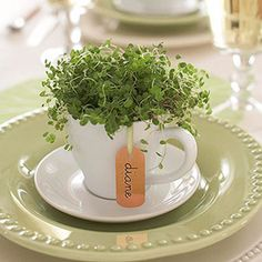 Coffee cups become tiny centerpieces for place settings...or just cute plant holders. Tuck a small baby's tear's plant into a demitasse! More spring decorating ideas: http://www.midwestliving.com/homes/entertaining/spring-centerpieces/