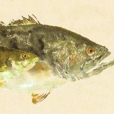 """Largemouth Bass - """"Side Kick"""" - Gyotaku Fish Rubbing - Limited Edition Print (27 x 14)"""