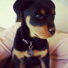This is Drover. Don't you just wanna cuddle him!!!!!!