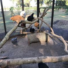 Inspiring Chicken Coop Ideas that are Worth to Build https://meowlogy.com/2018/05/17/chicken-coop-ideas-that-are-worth-to-build/ There are lots of chicken coop ideas you could find on the internet. You can either build one yourself, if you have at least basic woodworking skill, or purchase a pre-fabricated one. But first, you have to consider which plan and size will suit your need and your location.