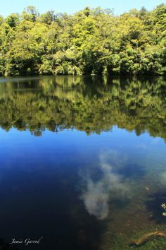 The rare lake on an island on a lake in the middle of Lake Waikareiti in the North Islands Te Urewera National Park http://www.walkinglegends.com/walks/waikaremoana-discovery/